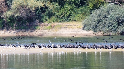 Duna-Drava National Park and Donau-Auen National Park presented the Network of Protected Areas – DANUBEPARKS at the Festival of Hungarian cattle dogs