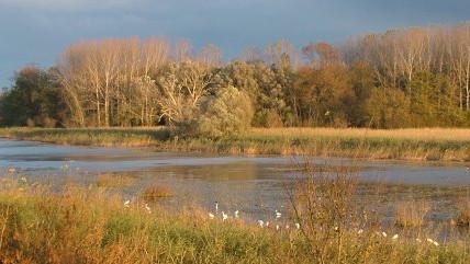 First Steps towards a cross-border conservation concept Austria-Slovakia