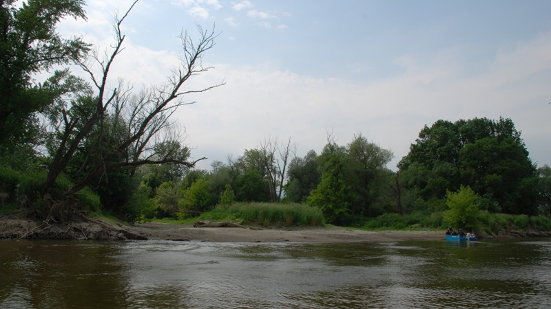 International Workshop on River Revitalization in Donau-Auen National Park