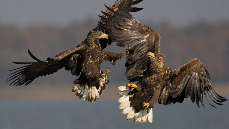 White-tailed Eagle Conference in October 2011 in Duna-Dráva National Park