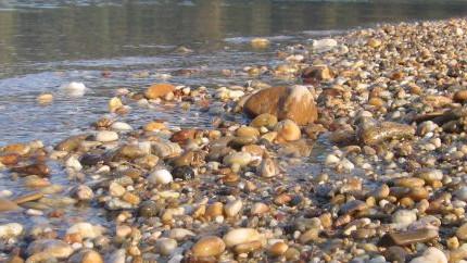 The Danube Wild Island Habitat Corridor