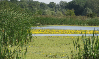Persina Nature Park - Flooded meadow in Pischensko swamp