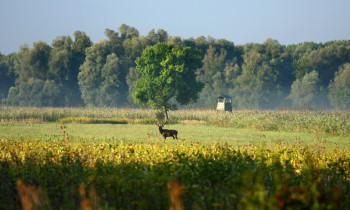 Jaroslav Pap / Vojvodinašume - Forest, meadows, and deer in the Serbian floodplain forests