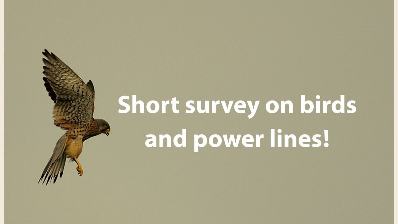 Help us in our mission and fill out the short survey