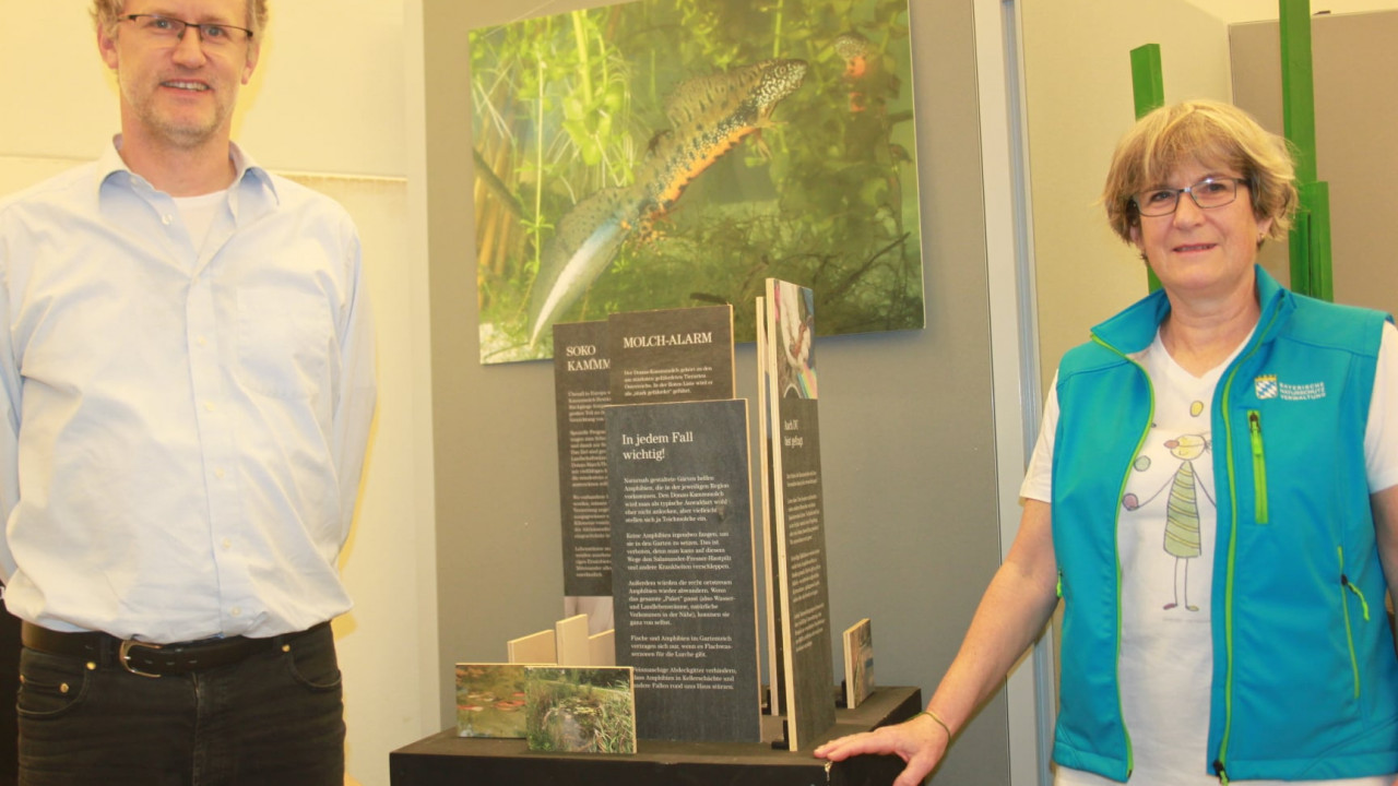 The Danube Crested Newt exhibition in Passau